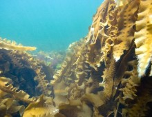 Kelp Forests and Climate Change